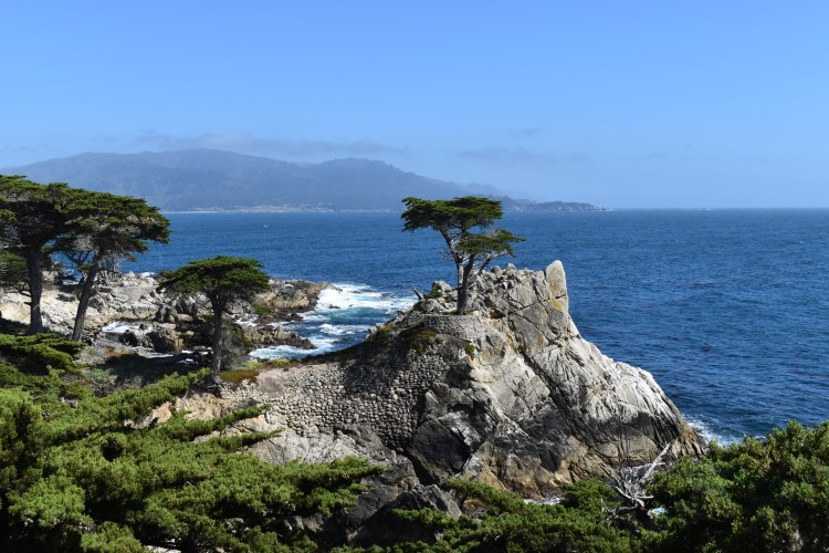 The Lone Cypress tree on the 17 mile drive in california