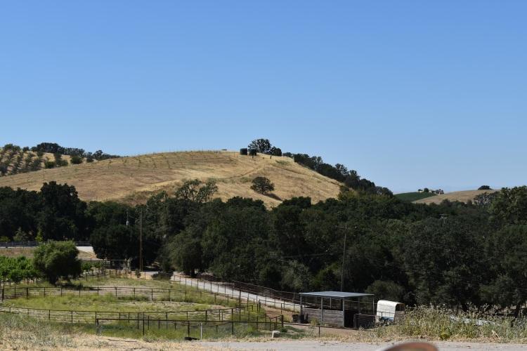 a hillside view in paso robles california