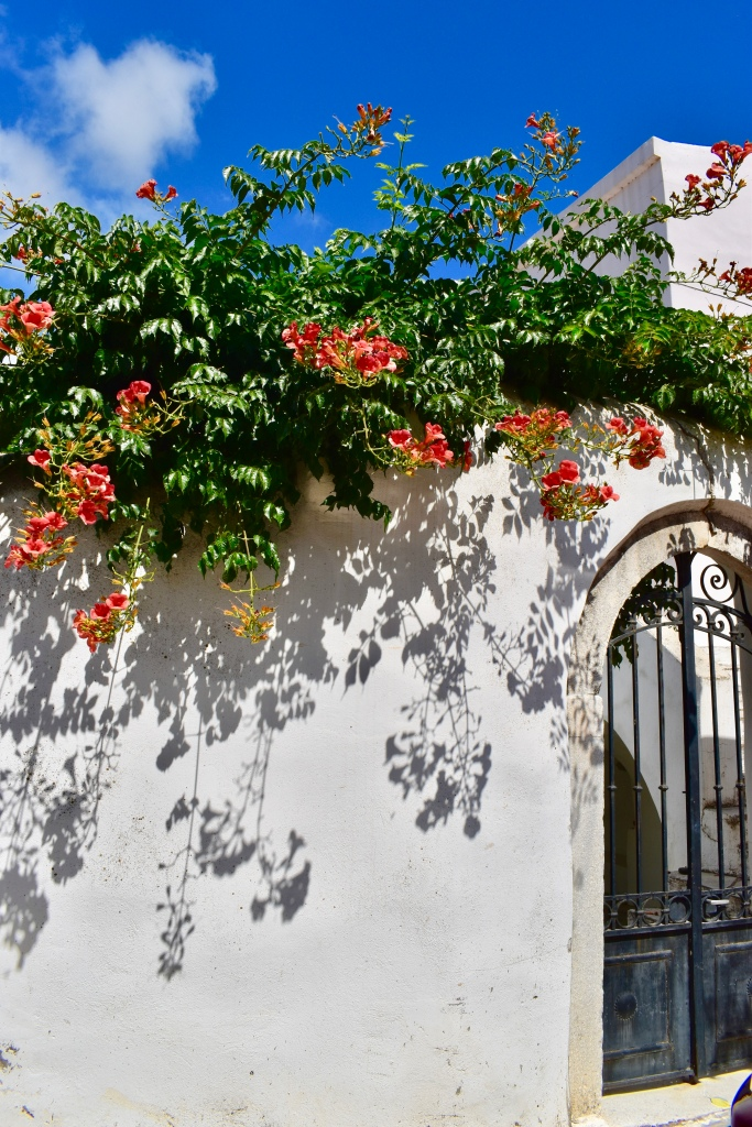 Orange flowers over a white washed wall and iron gate in Filoti, Naxos Greece