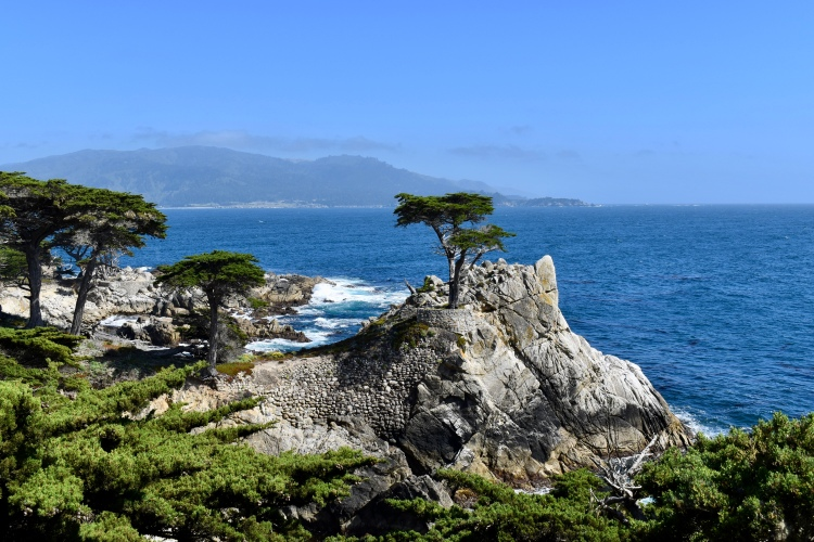 The Lone Cypress tree with crashing waves in Pebble Beach California