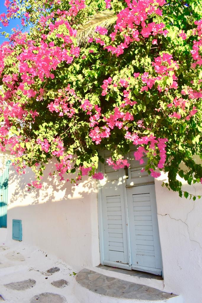 Pink flowers hang over a blue door in Mykonos Greece