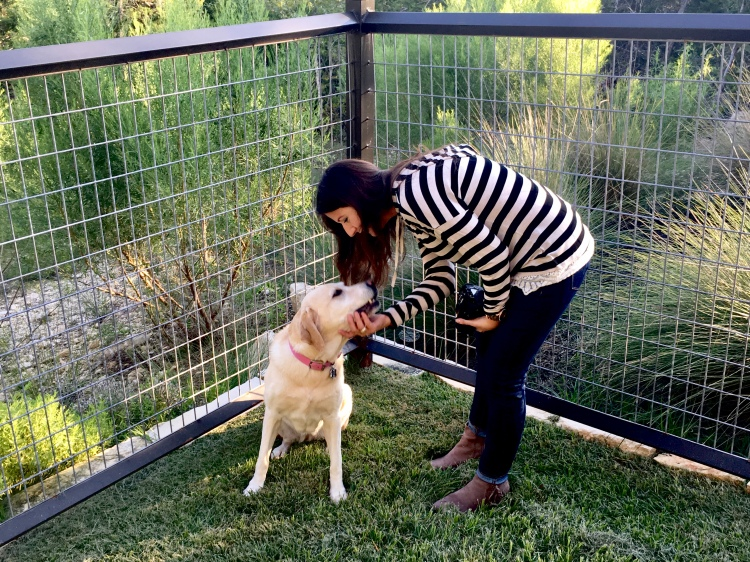 Erin from Cathedrals and Cafes blog bends to pet and talk to her yellow labrador retriever