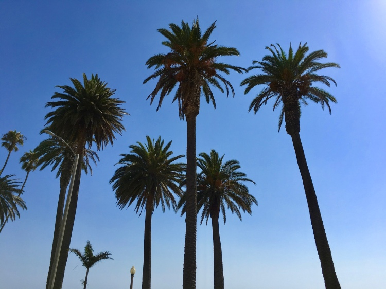 A row of palm trees in Los Angeles